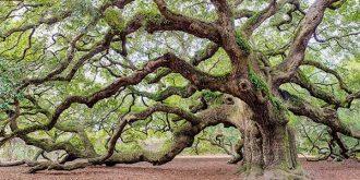 tree surveyor