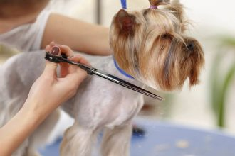 mobile pet grooming fort lauderdale